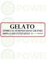 Gelato Feminizada 100% Granel