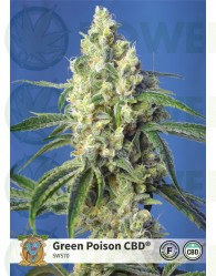 Green Poison CBD (Sweet Seeds)-5
