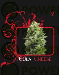 Semilla feminizada Gula Cheese (7 Pekados)