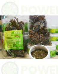 Hemp Raw Flores ricas en CBD (Prot-eco)