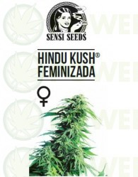 Hindu Kush Feminizada (Sensi Seeds)