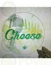 Ital Cheese Feminizada (Dreams Cannabis Seeds)