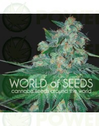 Ketama Feminizada (World of Seeds)