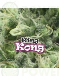 King Kong (Dr. Underground Seeds)