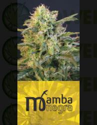 Mamba Negra (Blim Burn Seeds) Feminizada