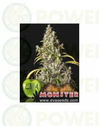 Monster (EVA SEEDS)