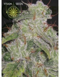 Northern Lights Auto Vision Seeds
