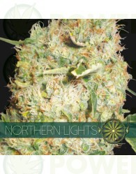 Northern Lights Feminizada (Vision Seeds)