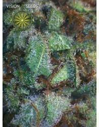 NY Diesel Feminizada (Vision Seeds)