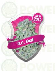 O.G. Kush (Royal Queen Seeds) Semilla cannabis Feminizada