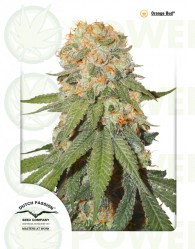 Orange Bud (Dutch Passion Seeds) Regular