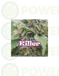 Painkiller (Dr. Underground Seeds)