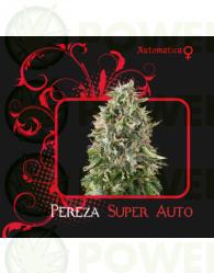 Pereza Super Auto (7 Pekados Seeds) Semilla feminizada Autoflorecidnte Marihuana Pereza Super Auto (7 Pekados Seeds)