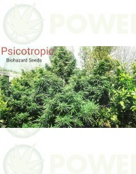 Psicotropic (Biohazard Seeds)