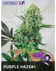 Purple Haze #1 (Positronics Seeds)