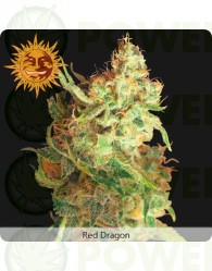Red Dragon (Barney´s Farm seeds)