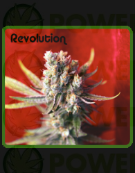 Revolution (Reggae Seeds) Regular