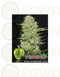 Veneno Feminizada (EVa Seeds)