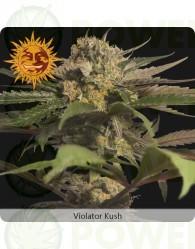 Violator Kush (Barney´s Farm)