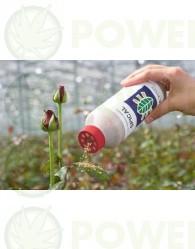 Lucha Biológica Amblyseius Californicus (Contra Araña Roja) en el Cultivo