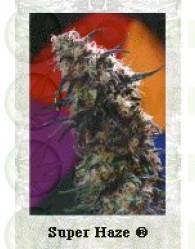 Super Haze (Dutch Passion Seeds)