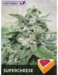 SuperCheese Feminizada (Positronics Seeds)