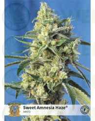 Sweet Amnesia Haze (Sweet Seeds)