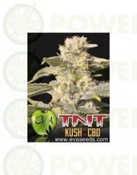 Tnt Kush CBD (EVa Seeds)