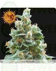 Vanilla Kush (Barney´s Farm)