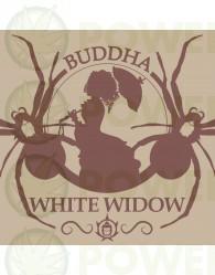 Buddha White Widow Feminizada Classics (Buddha Seeds)