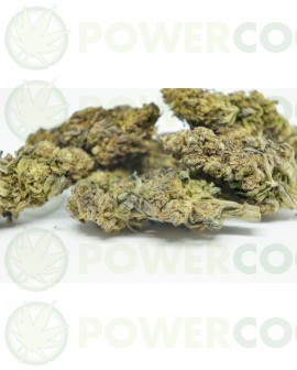 Flores CBD Purle H (TerpeScience)