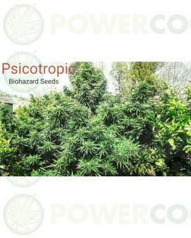 Psicotropic (Biohazard Seeds)