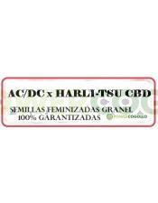 AC/DC x HARLI-TSU CBD FEMINIZADA GRANEL