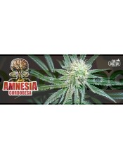 Amnesia Cordobesa (The Doctor Seeds)