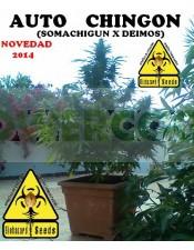 Auto Chingón (Biohazard Seeds) Feminizada Barata