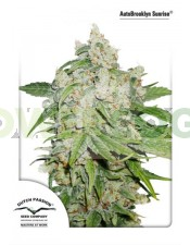 AutoBrooklyn Sunrise Dutch Passion Autoflowering