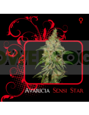 Avaricia Sensi Star