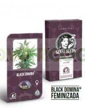 Black Domina Feminizada (Sensi Seeds)-10