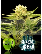BLACK DREAM (EVA SEEDS)