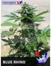 Blue Rhino Semilla Feminizada Cannabis de Positronics.
