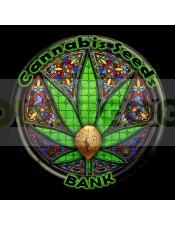 Auto Mandarina (Cannabis Seeds) Feminizada