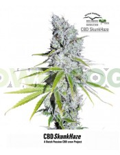 CBD Skunk Haze (Dutch Passion) Semilla Feminizada de Cannabis