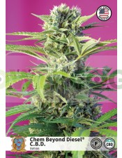 Chem Beyond Diesel CBD (Sweet Seeds)-5 (Semillas)