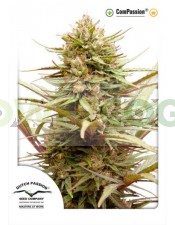 ComPassion (Dutch Passion) Semilla Feminizada de Cannabis