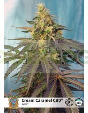 Cream Caramel CBD (Sweet Seeds) 5 semillas