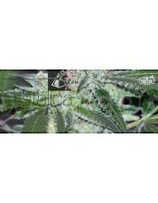 Cristalica Feminizada (The Doctor Seeds)