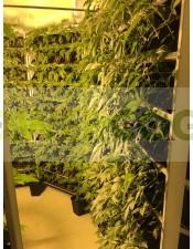 Cultivo Vertical Hidropónico 400 Plantas