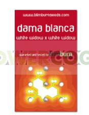 Dama Blanca (Blim Burn Seeds)