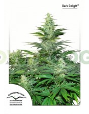 Semilla Cannabis Dark Delight (Dutch Passion) Barata