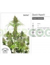 Dutch Haze (Dutch Passion Seeds)